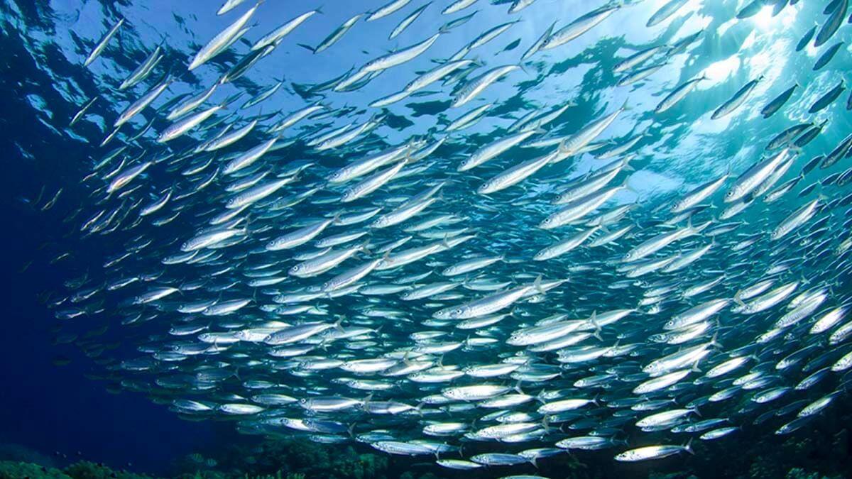 Морская рыбалка (фото 11)