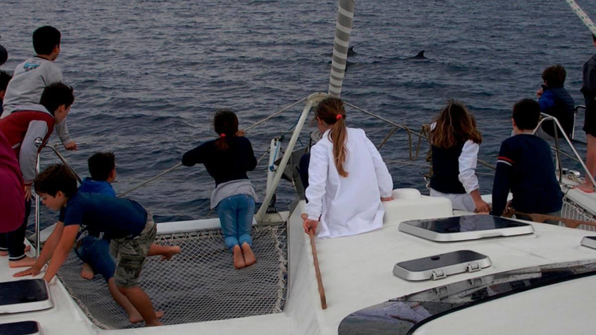 Экскурсия: Наблюдение за дельфинами (фото 7)