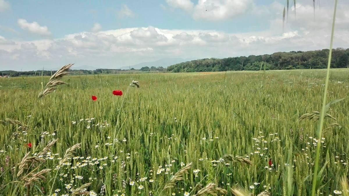 Экскурсия: Увлекательная ферма (фото 2)