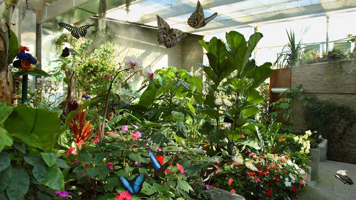 Экскурсия: В гостях у Парка Пиноккио и Дома бабочек (фото 10)