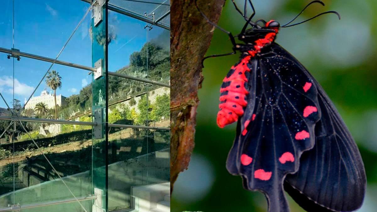Экскурсия: В гостях у Парка Пиноккио и Дома бабочек (фото 9)