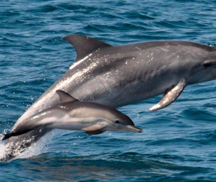 Наблюдение за дельфинами - экскурсии с гидом Ирина Лихота