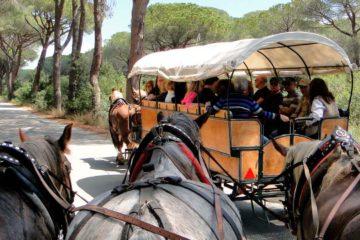 Прогулка в заповеднике поместья Сан-Россоре - экскурсии с гидом Ирина Лихота