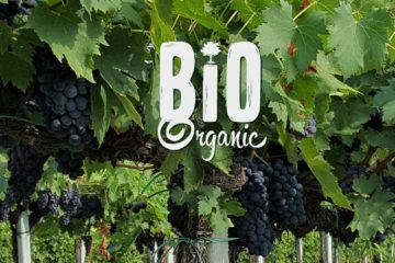 Об органическом и биодинамическом виноделии - рассказывает гид Ирина Лихота