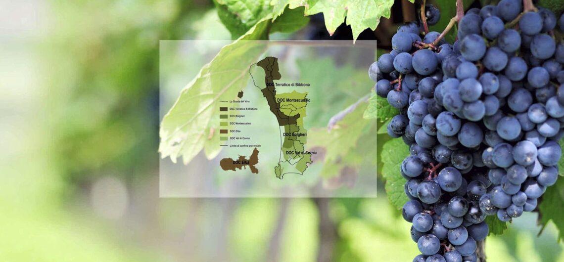 Дорога вин и оливкового масла Этрусские берега - экскурсии с гидом Ирина Лихота