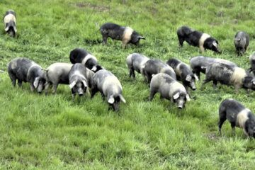 Свинина – эликсир молодости. Экскурсии с гидом Ирина Лихота