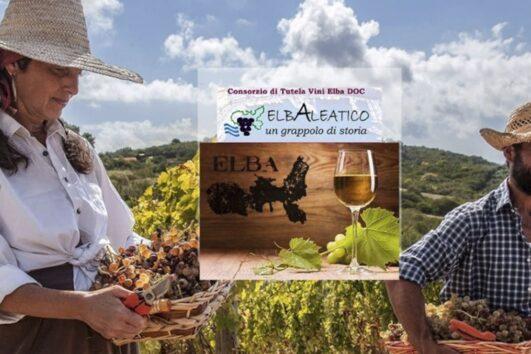 Винная дорога острова Эльба - экскурсии с гидом Ирина Лихота